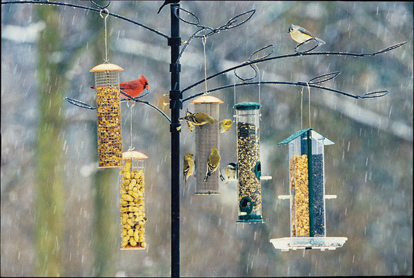 Offer a variety of foods at your backyard feeding station, and you may be rewarded with a varitey of birds!